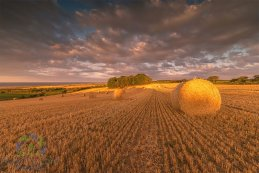 Golden Harvest 2016 2