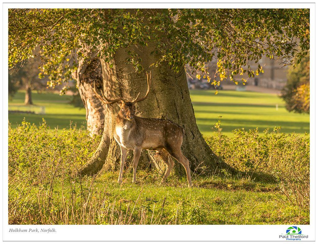 Holkham Park 4