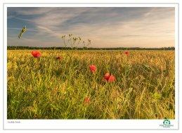 Norfolk Fields 2