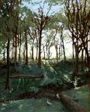sun streaked woods