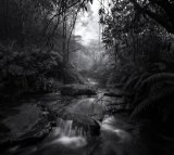 15. Leura Falls Creek Within A Wet And Foggy Morning