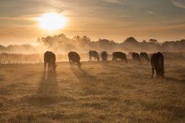 Meadow Ladies Enjoying Breakfast