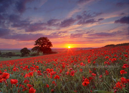 Sunset over a poppy field