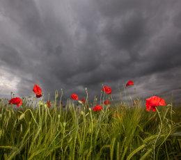 Under storm clouds