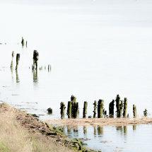 River Blyth 3