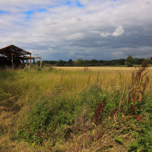 near Wangford