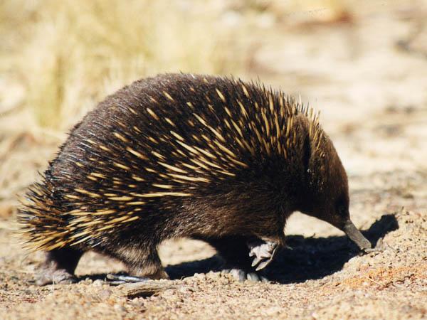 Escudio Tasmania