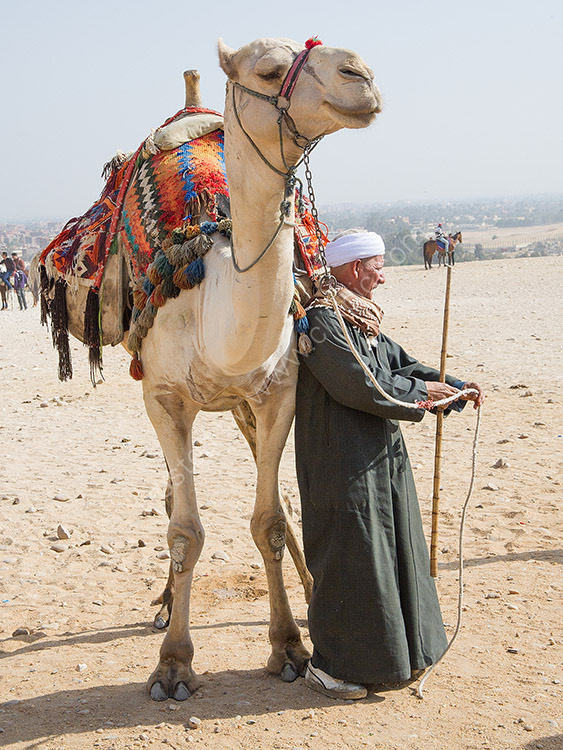 Man and his Camel
