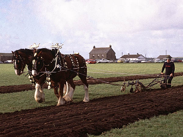 Ploughing West Cornwall