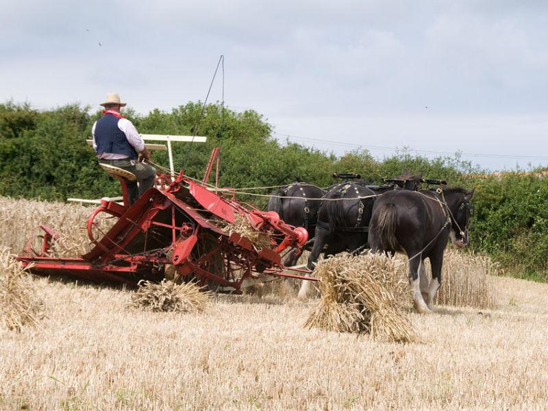 Victorian Harvest