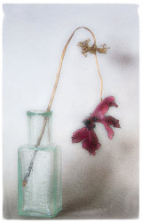 14 Dried Flower 2