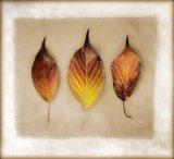 3 Three Leaves