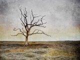 4 Saltmarsh Tree