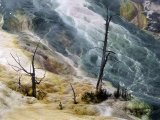 Dead Trees Mammoth Springs