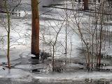 Frozen Flood