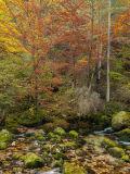 Autumn Scene #1
