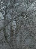 Winter Tales #2