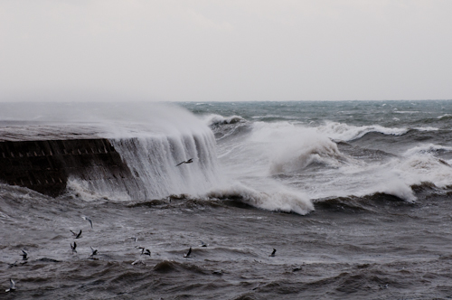 Winter storm-03306