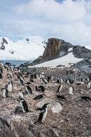Antarctica115