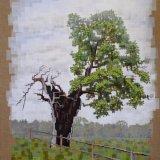 06-16 Ancient Oak