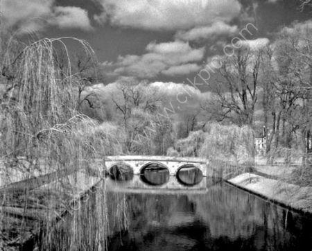 Spring Willows3.