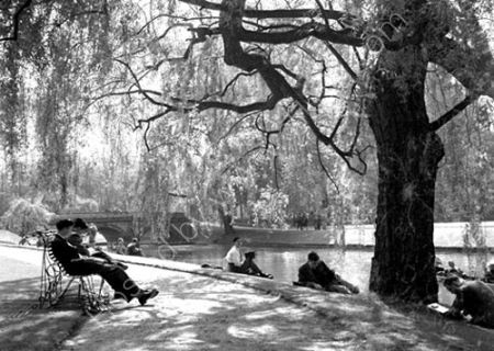 Afternoon by the Cam.