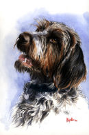 Pointer portrait. Watercolour