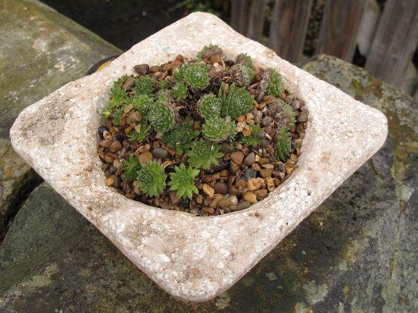 Hypertufa planter, Hypertufa Plant pot, Etsy, PJCreationCraft.