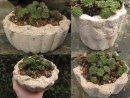 Jelly mold planter x3