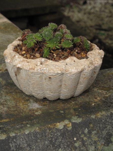 Hypertufa planter