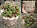 Hypertufa plant pot, planter x3, small.