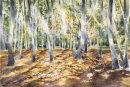 Grasswoods - Grassington