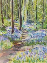 Bluebells 16 Middleton Woods (2)
