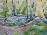 Bluebells 16 Middleton Woods (3)