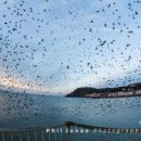 Burst of starlings