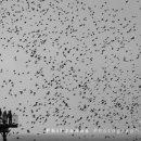Random starlings
