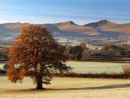 Autumn gold.Brecon Beacons.