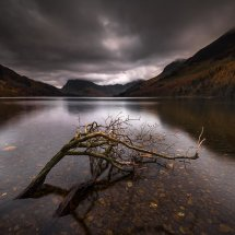 Lake District Buttermere Submerded Tree