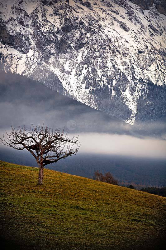 Mountain-Tree-Austria-1