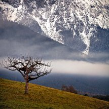Mountain-Tree-Austria-1