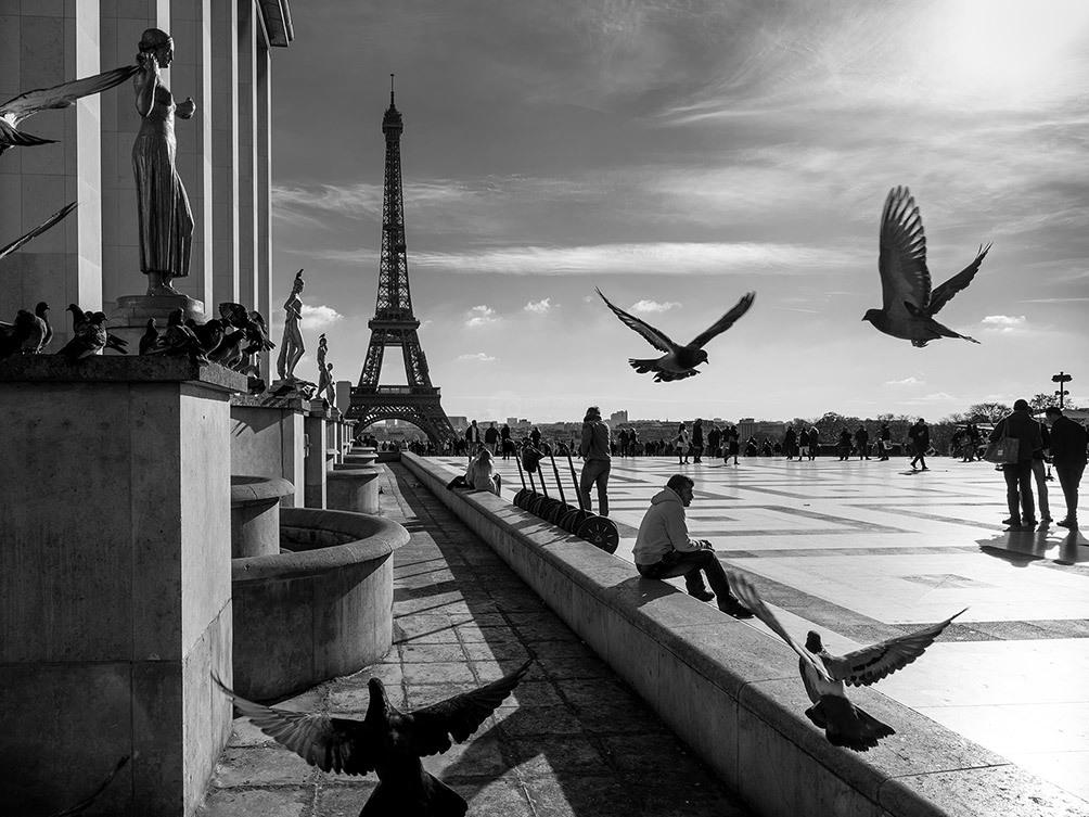 Eiffel Tower Birds