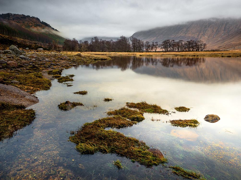 Water Grass Loch Etiv