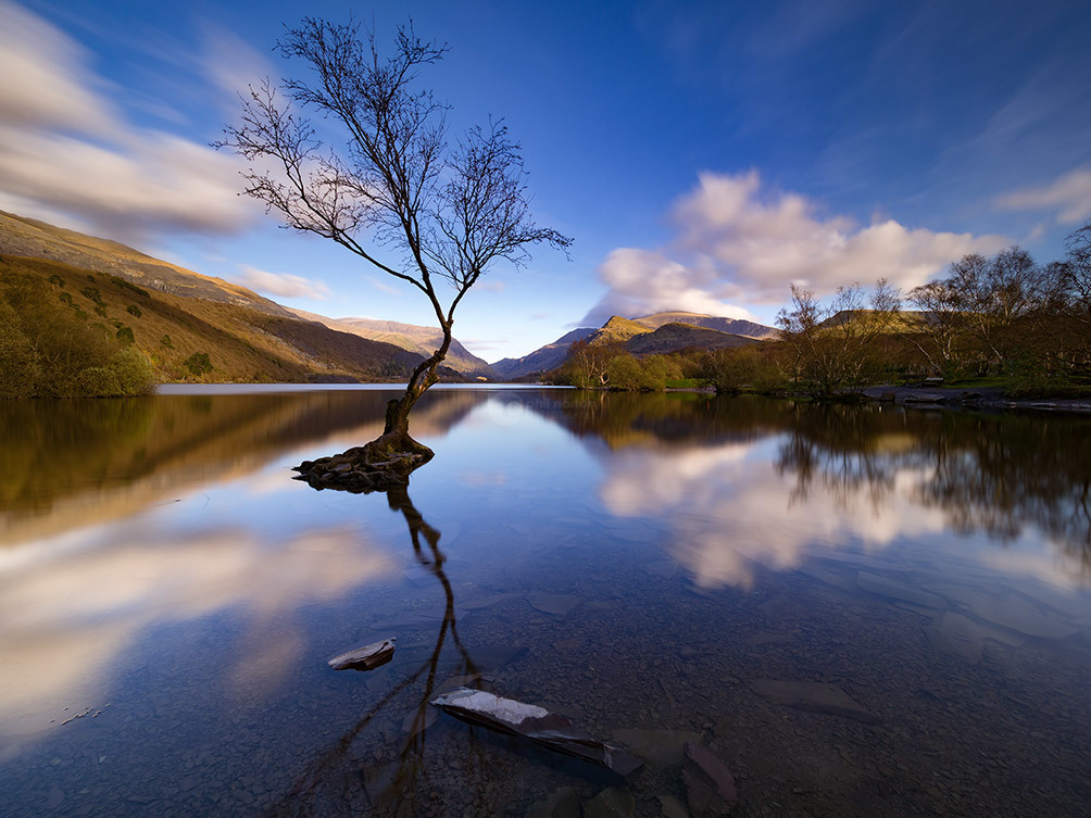 Lone Tree Blue Sky II