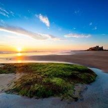 Bamburgh Green Dune