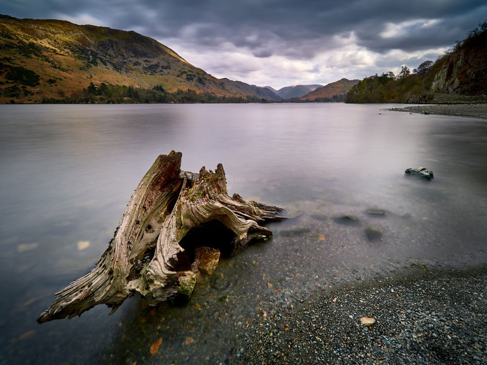 Twisted Tree II-Lake District