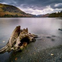 Twisted Tree II-Lake District