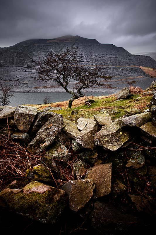 Llyn Peris Tree -Snowdonia