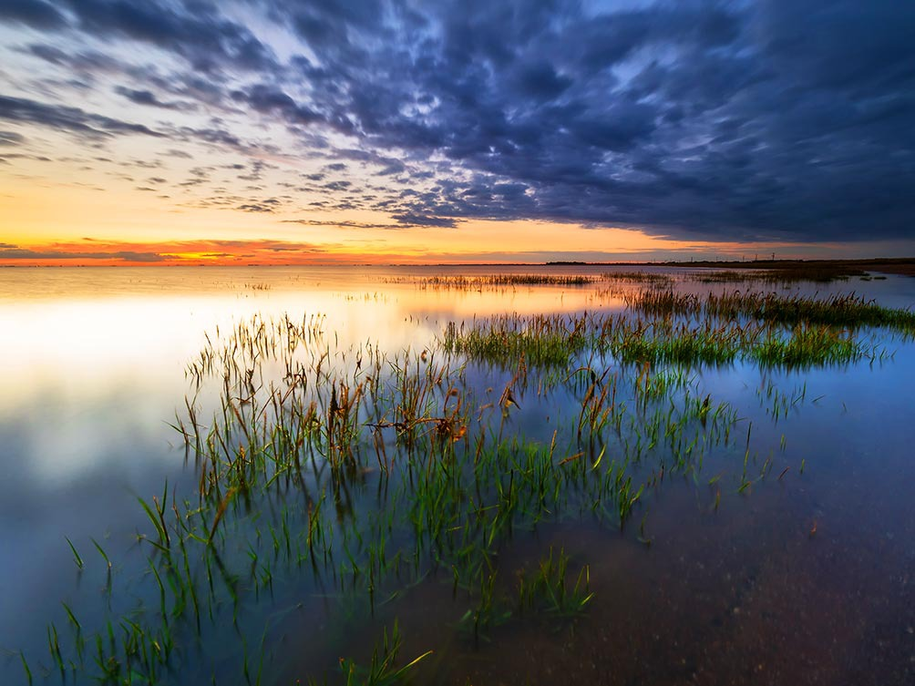 The Marshes-Spurn Point II