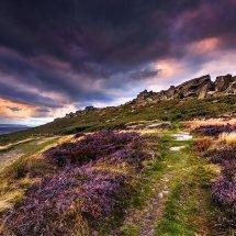 Purple Heather-Stanage Edge