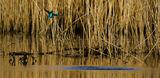 Kingfisher 9205